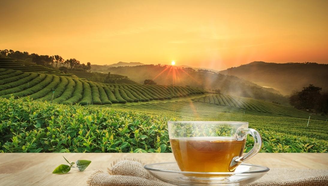 Чай EIILES: вкус во многих вариантах